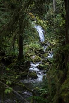 Hoh Rainforest - ONP