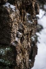 Awesome Bark Near Arapahoe Lakes, CO