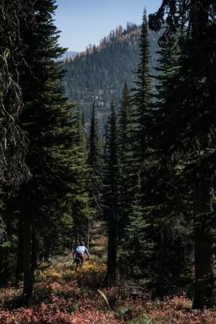 Joe Cruising Through a Hallway of Trees Along the Divide