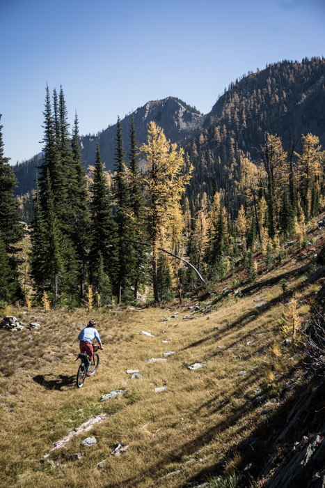 Joe Rallying into the Golden Larches