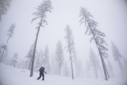 Grete Wandering Up Through Foggy Larches